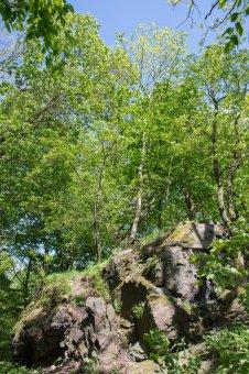 Zřícenina hradu Řebřík u Líšné