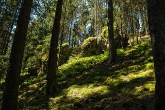 Zřícenina hradu Vimberk u Medového Újezdu