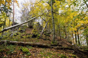 Zřícenina hradu Homberk u Příkosic